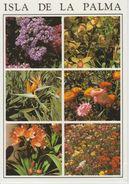 (CANA1042) LA PALMA. FLORES. FLEURS. FLOWERS - La Palma