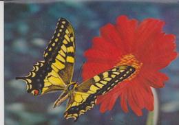 STEREOSCOPICA FARFALLA DA SEGRATE 1971 - Cartoline Stereoscopiche