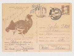 ROOSTERS MOUNTAINS BIRDS, , ROMANIA CIRCULATED 1980   SLATINA WITH POSTMARK PITESTI GARA - Enteros Postales
