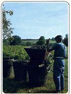 AGRICULTURE      L 26  /   LES VENDANGES /  TRAVAIL DE LA VIGNE    CPM CPSM  10 X 15 - Vignes