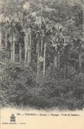 Viêt-Nam - Tonkin - Sontay, Paysage, Forêt De Lataniers - Collection Dieulefils - Carte N° 493 - Viêt-Nam