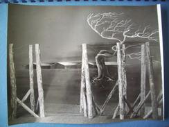 WW2 / PRISONNIERS DE GUERRE / STALAG / OFLAG / PHOTOGRAPHIE GRAND FORMAT / ORIGINALE / 4 - 1939-45