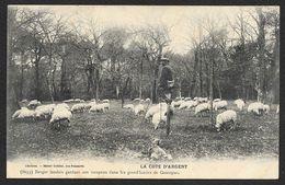 Berger Landais Et Son Troupeau De Moutons (Guillier) Landes (40) - Unclassified