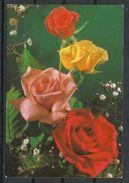 Flores_Rosas. - Flores