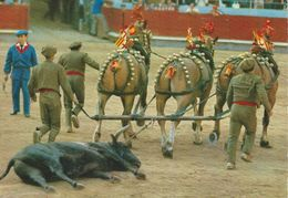 Corrida De Toros.   Course De Taureaux - Bull Race.  # 06999 - Corrida