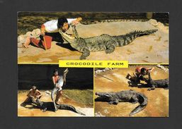 ANIMALS - ANIMAUX - CROCODILE FARM - CATCHING CROCODILE AT CROCODILE FARM IN THAILAND - Animaux & Faune