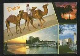 United Arab Emirates UAE Dubai Picture Postcard View Of Dubai  Building Camel Animal - Dubai