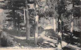 Corse (20) - Forêt De Valdoniello - Zonder Classificatie