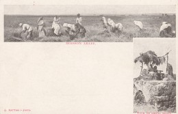 Arab Harvest And Watch Tower Ottoman Empire Images, C1900s Vintage Postcard Jaffa Publisher - Cultivation
