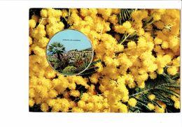 Carte Fantaisie Parfumée Avec Photo BORMES LES MIMOSAS - Vallazur Grasse Parfum Fragonard Parfum Mimosa - Flowers