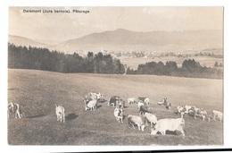 (16032-00) Suisse - Delémont - Pâturage - JU Jura