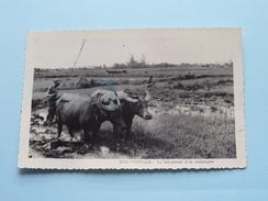SUD-VIETNAM Le Laboureur à La Campagne - Anno 1955 ( Zie Foto Details ) Blauwe Schijn ! - Viêt-Nam