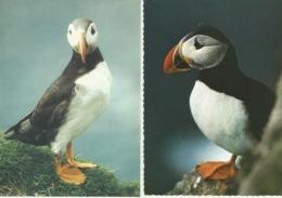 FAROE ISLANDS Lundin Lundini Puffins Papageientaucher 4 Cards - Faroe Islands