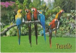 CPM. PERROQUETS. TENERIFE. - Oiseaux