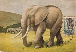AEF - CM - Timbre Poste 240 Année 1957 - Eléphant - Au Recto Timbres 231 Et 238 - AEF - Autres