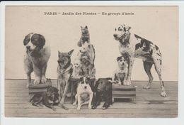 PARIS - SEINE - 5ème ARRONDISSEMENT - JARDIN DES PLANTES - UN GROUPE D'AMIS - CHIEN - CHIENS - CHAT - DOG - CAT - Distrito: 05