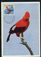 Equateur - Carte Maximum 1959 - Oiseau - Equateur