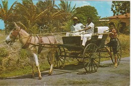 CPA BARBADOS - BARBADES - Old Donkey Drawn Buggy On Country Road - Cartes Postales