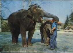 ELEPHANTS  :  3D   (  Groot Formaat 14.5 X 10.5 Cm )  2  Scans - Éléphants