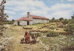 Régusse 83 - Mas Ferme Berger Moutons Anes - Oblitérations Le Castellet 1968 - France