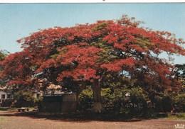 REPUBLIQUE DU SENEGAL  FLAMBOYANT (dil276) - Sénégal