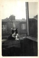 PHOTO PARIS 1934 AVEC CHAT  FORMAT 8.50 X 6 CM - Lieux