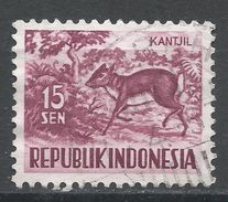 Indonesia 1956. Scott #426 (U) Lesser Malay Chevrotain - Indonesia