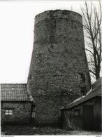 OPSTAL - Buggenhout (O.Vl.) - Molen/moulin - Romp Van De Plaatsemolen Of Patattenmolen In 1981. Prentkaart 10x14 Cm - Buggenhout