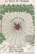 """Le  Secret  De  L,Araignée  -  Je  Meurs  Ou  Je  M,attache-  Je   Vous  Porte  Bonheur ...""""( Carte  Dorée  ) - Insectes"""