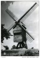O.L.V.- LOMBEEK - Roosdaal (Brabant) - Molen/moulin - Oudere Prentkaart Van De Hertboom Windmolen Voor De Herbouw - Roosdaal