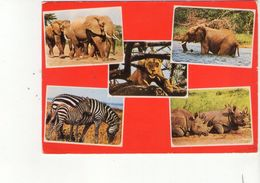 Cpm Kenya - Animaux - Avec Tampon Et Timbre Du Kenya - Kenia