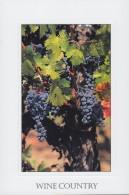 Wine Country, California (PC339) - Vines