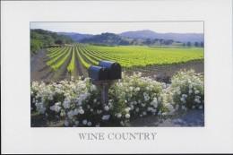 Wine Country, California (PC344) - Vines