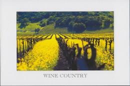 Wine Country, California (PC345) - Vines