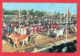 Myanmar Burma Birmanie Rangoun Rangoon Racing Bullock Carts Course De Chars à Boeufs ( Format 10,2x15,2 ) - Myanmar (Birma)