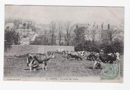 CPA Dieppe - La Traite Des Vaches (1906, Proche TBE) - Dieppe