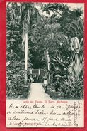 MARTINIQUE SAINT PIERRE JARDIN DES PLANTES ANIMEE CARTE PRECURSEUR TIMBREE GROUPE PAIX 10C NOIR 1901 - Martinique