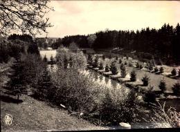 Ham-Sur-Heure Les étangs Du Vivier - Photo Véritable - NELS, Edition Brassini-Dubois N°5 - Ham-sur-Heure-Nalinnes