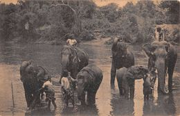 "D6243 ""SRI LANKA - TEMPLE ELEPHANTS AT KATUGASTOTA"" ANIMATA, ELEFANTI.  CART  NON  SPED - Sri Lanka (Ceylon)"