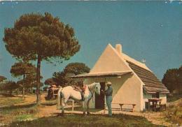 Cheval    H59         En Camargue. Cabane De Boucanet - Pferde