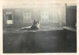 PHOTO  PARIS 1934 AVEC CHAT  FORMAT 8.50 X 6 CM - Photos