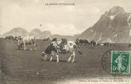 """.CPA FRANCE 74 """"Le Petit Bornand, Plateau De Cenyse Et Pointe Du Midi"""" - France"""