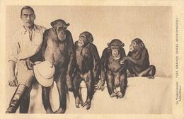 Les Grands Singes Antropoïdes (Anthropoïdes) - La Vulgarisation Scientifique, Carte Non Circulée - Apen