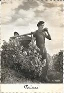 Vendanges - Les Porteurs - Photo R. Moisy - Farmers