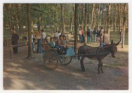"91 - Villedon     Parc D'attractions ""Babiland"" - Otros Municipios"