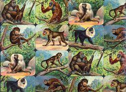Planche Avec 16 Chromos Découpis Scraps: Singes (Ref. 112919) - Tiere