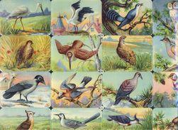 Planche Avec 16 Chromos Découpis Scraps L&B: Oiseaux (Ref. 112922) - Tiere