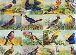 Planche Avec 16 Chromos Découpis Scraps L&B: Oiseaux (Ref. 112916) - Tiere