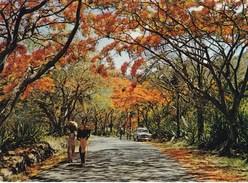 ILE MAURICE/FLAMBOYANTS ROUTE DE MOKA (dil319) - Mauritius