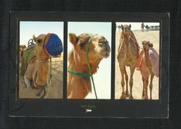United Arab Emirates UAE Dubai Picture Postcard Camel View Card U A E - Dubai